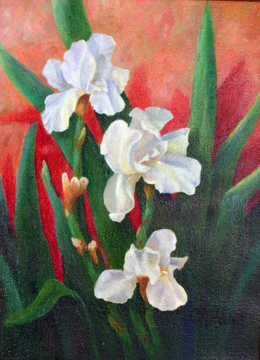White Irises by Cheryl Wasar